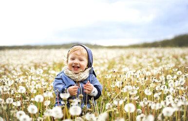 Happy little boy in meadow full of dandelions - HAPF02330