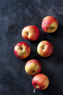 Organic Elstar apples on dark background - CSF28382
