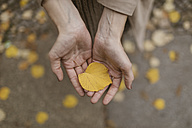 Woman's hands holding autumn leaf - KMKF00048