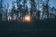 Forest at sunset - VPIF00255