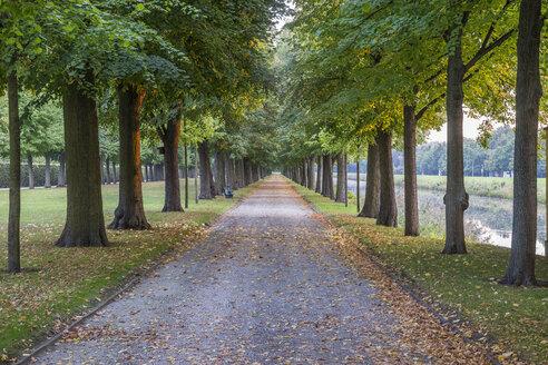 Germany, Lower Saxony, Hanover, Herrenhaeuser Gaerten, alley in autumn - PVCF01114