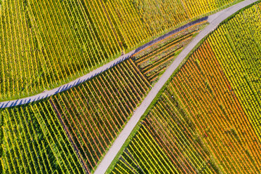 Germany, Stuttgart, aerial view of vineyards at Kappelberg in autumn - STSF01362