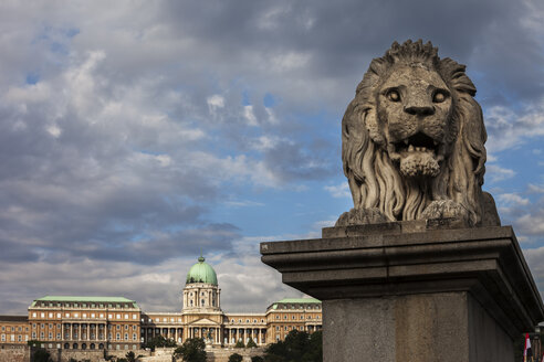 Hungary, Budapest, Lion sculpture on Chain Bridge and Buda Castle in background - ABOF00302