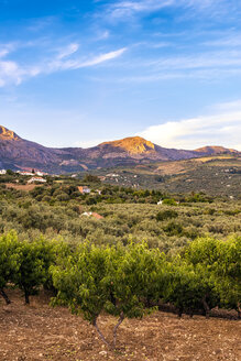 Spain, Mondron, view to olive grove with peach trees in the foreground - SMAF00848