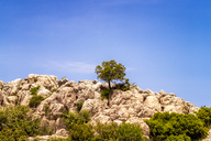 Spain, Malaga Province, El Torcal, single tree on limestone formations - SMAF00866