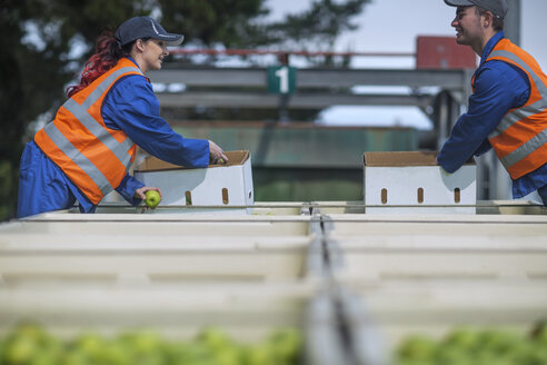 Workers in reflective vests packing apples - ZEF14678