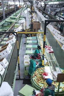 Women working in apple factory - ZEF14693