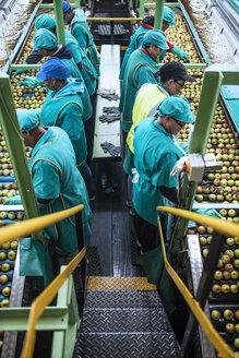 Women working in apple factory - ZEF14696