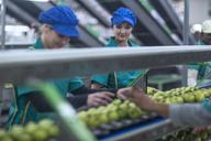 Two women working in apple factory - ZEF14708
