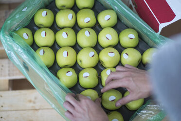 Close-up of woman's hands and green apples in cardboard box - ZEF14714