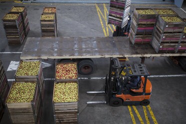 Forklift moving crates with apples - ZEF14720