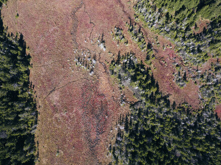 USA, West Virginia, Aerial view of Dolly Sods Wilderness area - BCDF00334