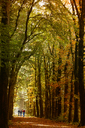 Germany, Autumn forest and hiking group - KLR00540
