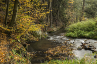 Germany, Thuringia, Ziegenrueck, mountain stream in autumn - MELF00190