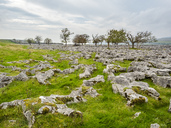 Great Britain, England, District Yorkshire Dales, Southerscale, Southerscales Nature Reserve, rocky field - STSF01392