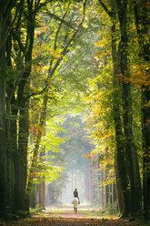 Rider in autumnal forest - KLR00542