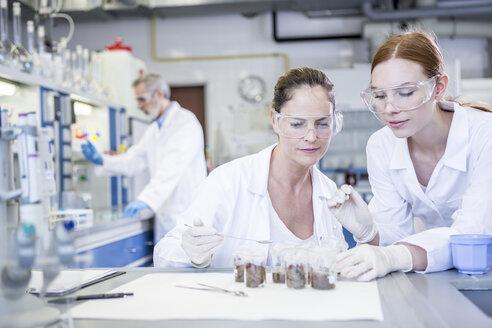 Scientists in lab examining sample - WESTF23710