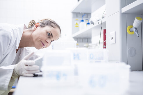 Scientist in lab examining samples - WESTF23728