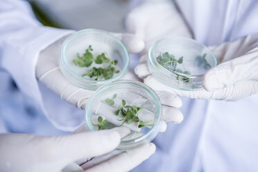 Scientists in lab holding germs in petri dishes - WESTF23764