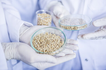 Scientists in lab holding grain samples - WESTF23767