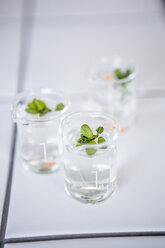 Plant germs in beakers in lab - WESTF23770