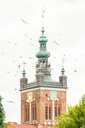 Poland, Pomerania, Gdansk, Town hall tower and seagulls - CSTF01530