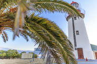 South Africa, Cape Town, Robben Island, Lighthouse and palm tree - ZE14848