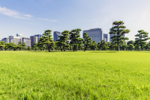 Japan, Tokyo, Chiyoda district, Meadow in Imperial Palace area, park, green meadow and trees - THAF02068