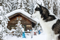 Austria, Altenmarkt-Zauchensee, dog in snow with woman at hut in background - HHF05530