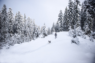Austria, Altenmarkt-Zauchensee, young woman with dog on snowshoe hike in winter forest - HHF05536