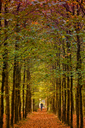 Germany, walker on autumnal forest track - KLR00556