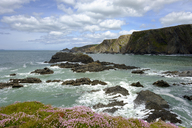 Great Britain, England, Devon, Hartland, Hartland Quay, Cliff coast - SIEF07614