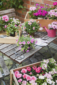 Gardening, planting of summer flowers - GWF05329