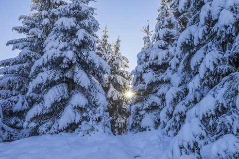 Germany, Lower Saxony, Harz National Park,  snow-covered trees in the morning - PVCF01198