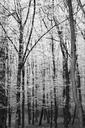 Germany, winter forest - JTF00863