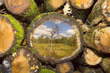 Stack of wood, digitally manipulated, dead tree - KLRF00564