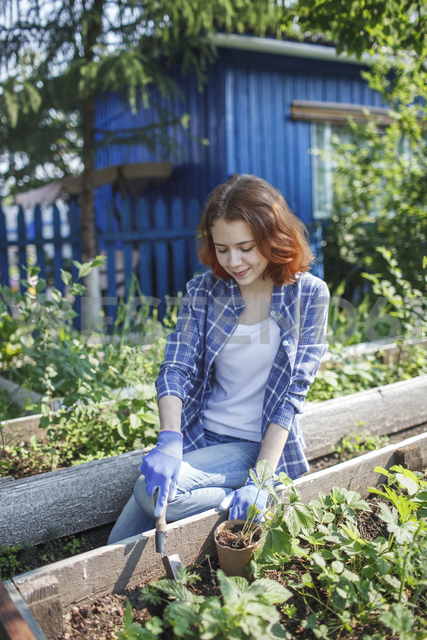 Young woman planting strawberry plant in garden - VPIF00274