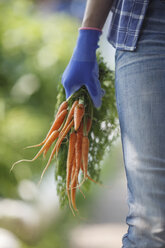 Woman holding bunch of carrots - VPIF00277