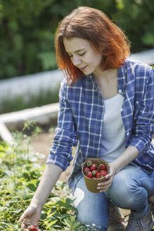 Female gardener harvesting strawberries - VPIF00280