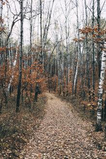 Russia, Blagoveshchensk, autumn landscape - VPIF00304