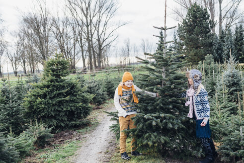 Brother and sister choosing Christmas tree on a farm - MJF02206