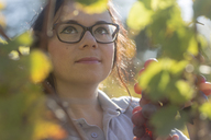 Germany, vineyard, woman harvesting blue grapes - SGF02131