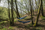 Germany, Rhineland-Palatinate, Vulkan Eifel, hammocks between trees in forest - GUSF00271