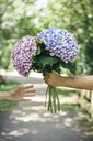 Detail of man's hand giving a bouquet of hydrangeas to a woman - DAPF00862