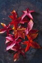 Autumn leaves of sweetgum - CSF28641