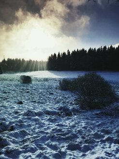 Germany, North Rhine-Westafalia, Eifel, winter in Naturpark High Venn - Eifel, sunbeams - GWF05372