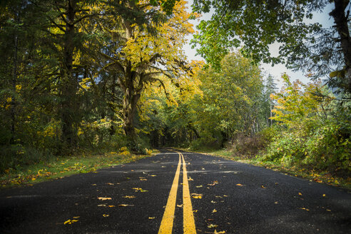 USA, Washington State, Hoh Rain Forest, Road in autumn - STCF00371