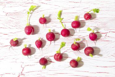 Red radish on wood - CMF00759
