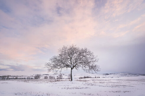 Spain, sunset in winter landscape with single bare tree - DHCF00166