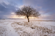 Spain, sunset in winter landscape with single bare tree - DHCF00169